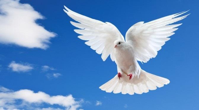 Holy Spirit pic
