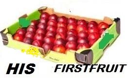 template Firstfruit